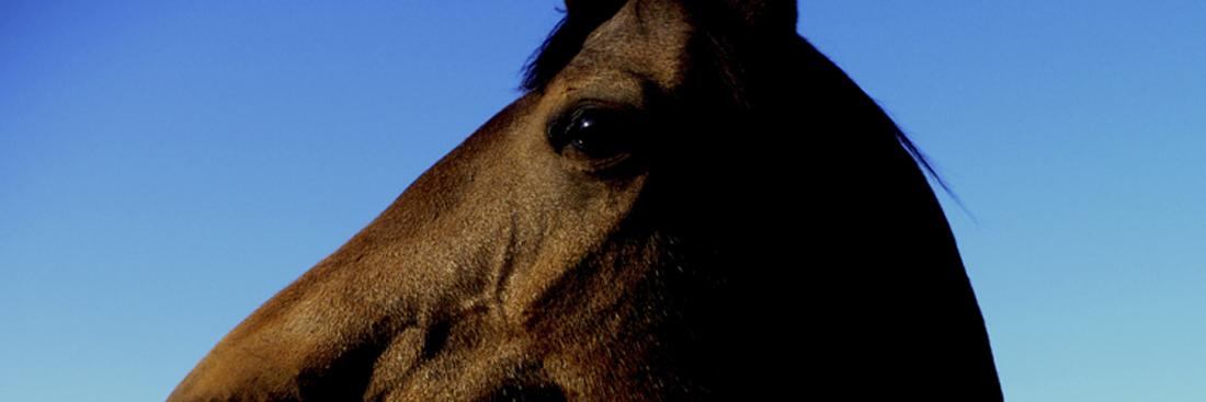horses_eye