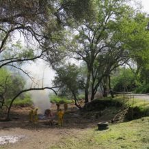Chinatown Gardens clearing by Cal Fire