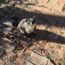 Do you know this cat in Moke Hill?