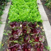 Moke Hill Community Garden Project