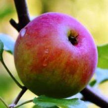 Appleseed Farm & Garden